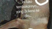 Heboh Postingan Penembakan Anjing, Kapolresta Tangerang Perintahkan Anggota Tangkap Pelaku